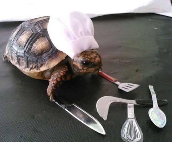 Tortuga chef