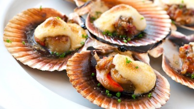 Queen scallop close up