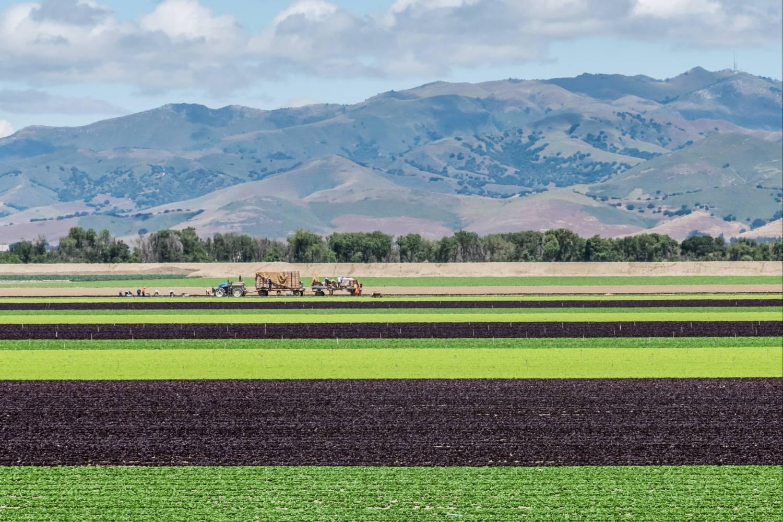 Victorville's Grassland View