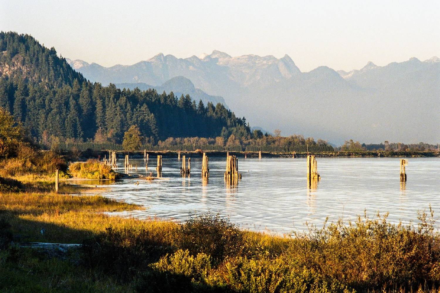 Private Chef in Port Coquitlam header