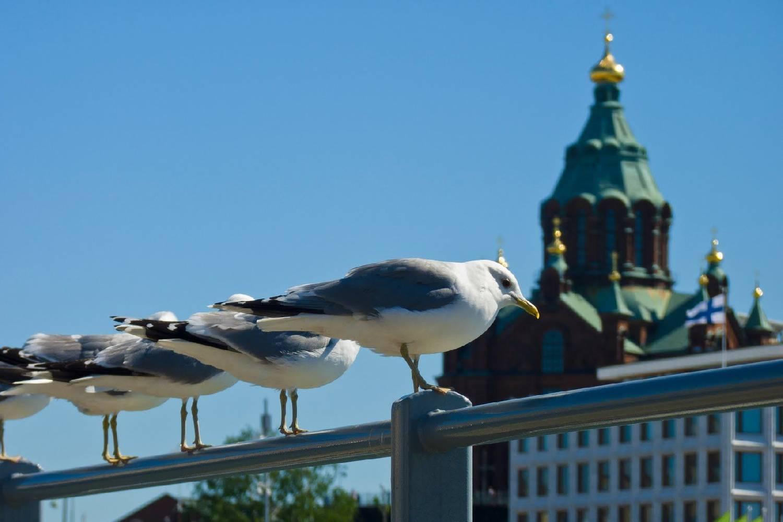 Private Chef in Helsinki header