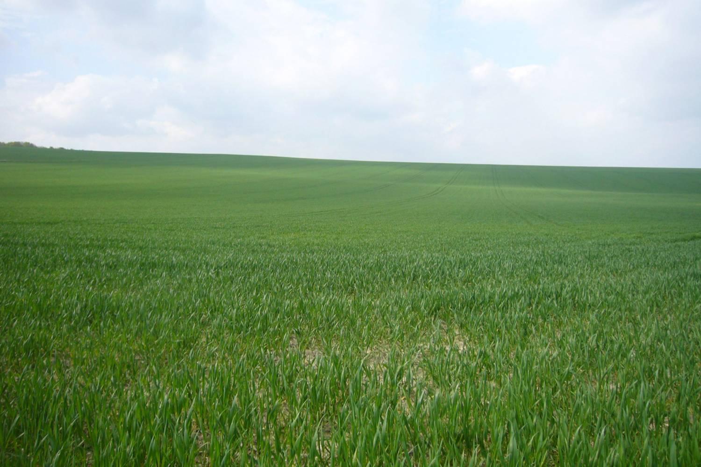 Generic field