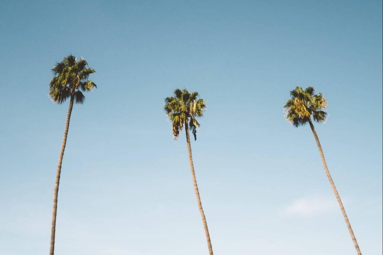 Tustin's Palms View